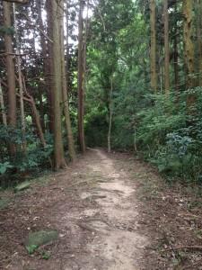 青山散策路。