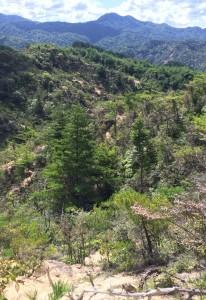 白い砂地、岩、緑がモザイクになっていて美しい。遠景は矢筈ヶ岳。