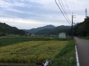 白髪岳が見える。