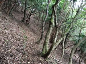 白髪岳北の小ピーク山腹の踏み跡のような道。