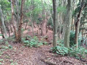 鐘掛の辻。松尾山側から見下ろしている。カニコウモリが多い。