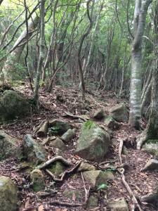 松尾山への登り。