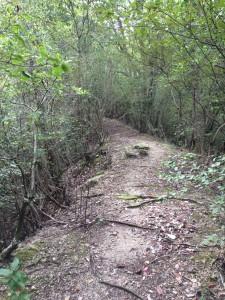 赤子谷と熊ヶ谷川の間の尾根の道。