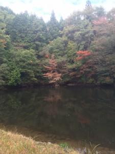 「神秘的な」池。