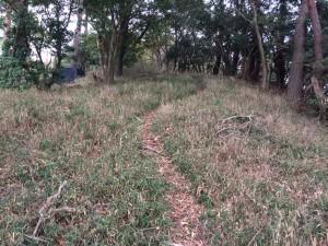 小和田山への尾根道2。