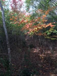 小和田山への尾根道4。