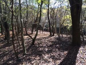迷ったあたり。樹林は美しい。