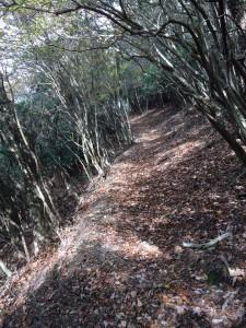 宮川への尾根道2。