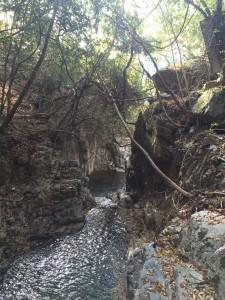 沢に戻ったところから、ゴルジュ状の大滝の落ち口を振り返る。