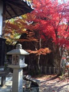 十三仏の社殿と岩と紅葉。