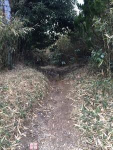 暗峠への道。この先は泥地獄。