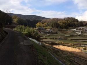 大和平群の田園。