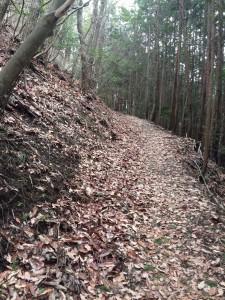 二丁付近。ようやく上(左)側は自然林になる。