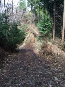 林道から井足岳への道への入り口。