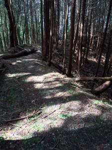 井足岳に続く尾根道。ところどころ異様に幅広くしっかりしている。