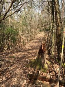 自然林の小尾根。