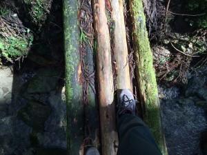 再び丸木橋で沢を渡る。