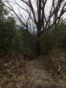 交野山からの下り。