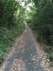 舗装された坂道。