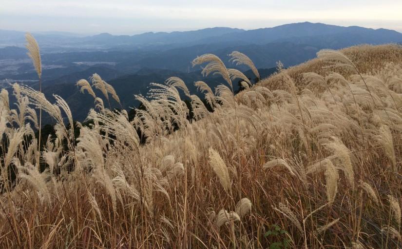 金山谷から岩湧山 (897m)