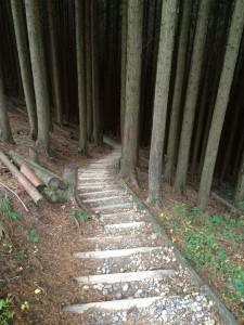 植林地の階段下り。