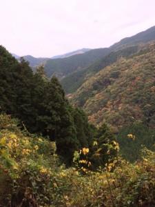 神野山、燈明岳方面の眺め。
