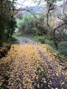 未舗装の林道。